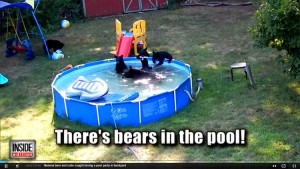 Even The Bears Like Swimming Pools Freestyle Pools Spas Inc